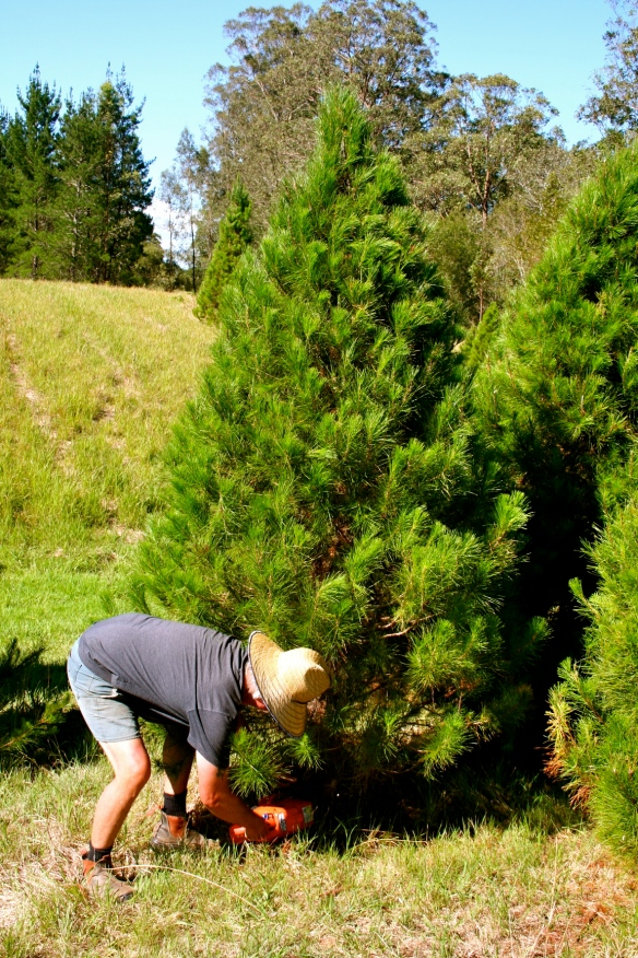 Choosing our tree at the Burrell Creek Christmas Tree Farm