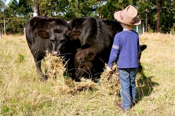 The Kid feeding the steers