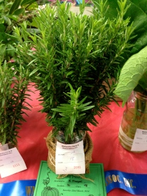 Award-winning rosemary